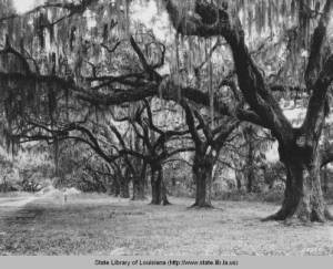 The Packenham Oaks are located near the battlefield along St. Bernard Highway. It has been rumored that Packenham died from his wounds under the mossy branches. Historians, however, have yet to confirm that claim.